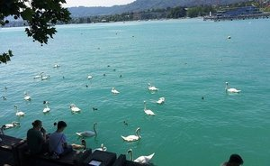 Tourist Zurich: array of swans, shawarma for $10 and 'Fight Erdogan!'
