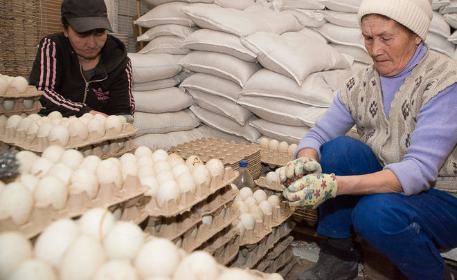 Bird flu will leave Tatarstan without eggs, 450k hens and private poultry factory